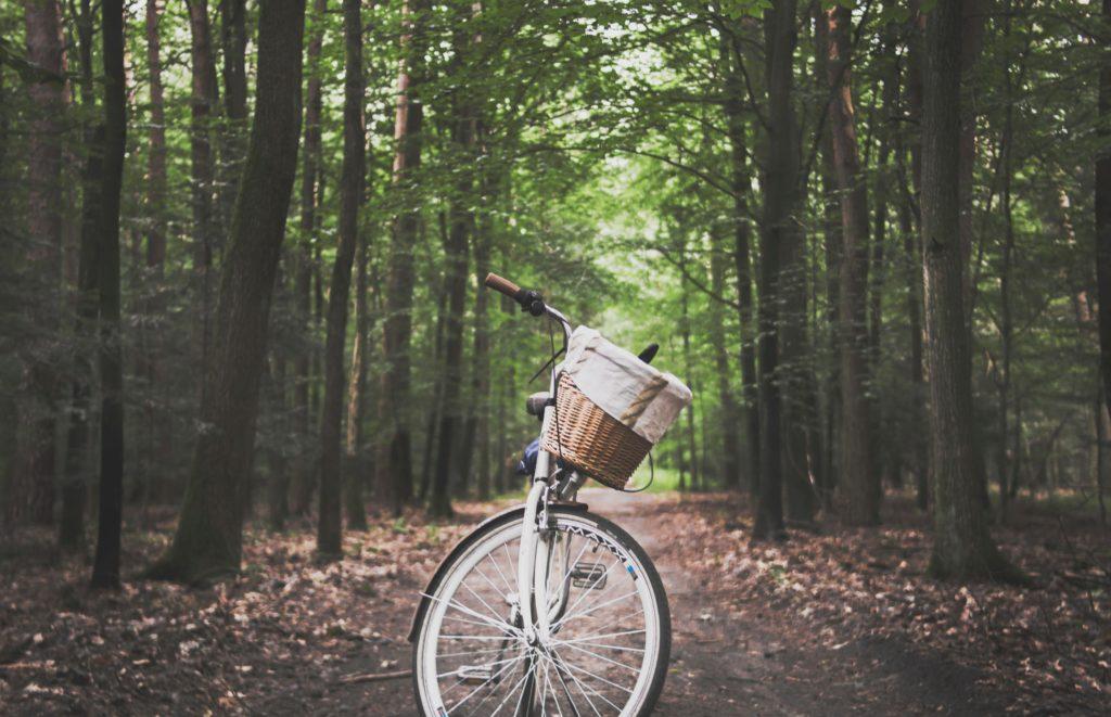 szlaki rowerowe w polsce trasa przez las