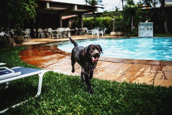 wakacje z psem nad morzem